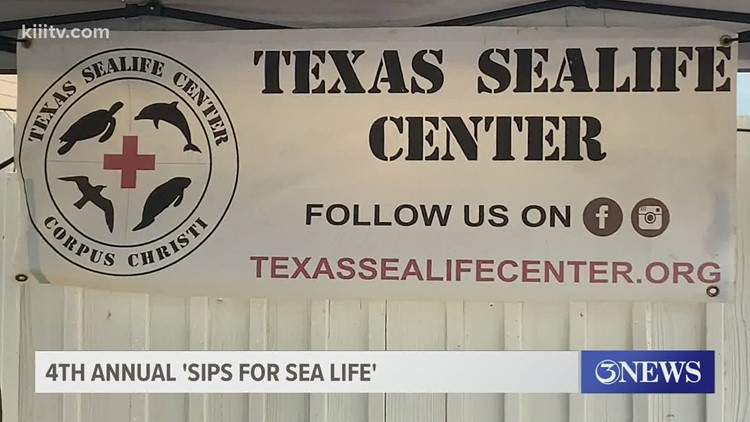 Fourth annual 'Sips for Sealife' helps Coastal Bend animals and small businesses
