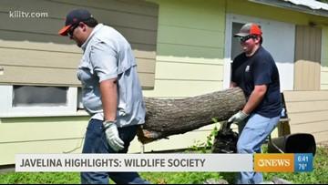 Javelina Highlights: Wildlife Society