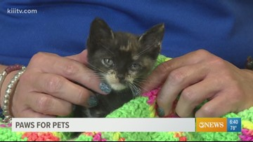 Adopt Lizzy on Paws for Pets