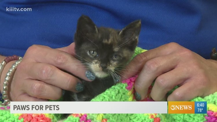 Paws for Pets: Corpus Christi June 11th