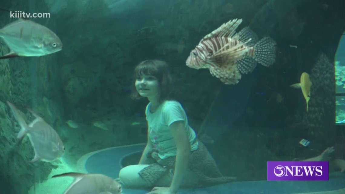 $2 Community Day coming to Texas State Aquarium