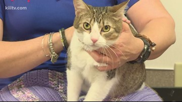 Adopt a cat for $15 on Paws for Pets