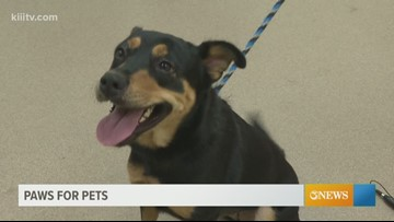 Adopt Reese on Paws for Pets