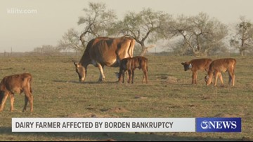 South Texas farm feels effects of Borden Dairy bankruptcy