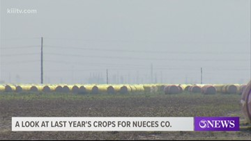 Local experts reflect on this season's farm crops