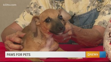 Adopt Charlie on Paws for Pets