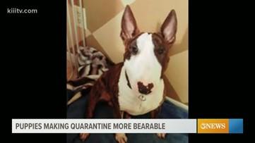 Puppies making quarantine more bearable