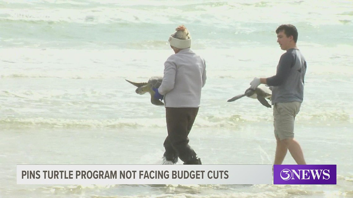 Sea turtle recovery program set to continue funding for four additional years