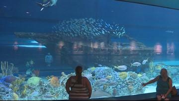 Sensory Sensitive Sunday at the Texas State Aquarium