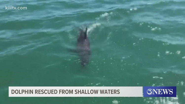 Stranded dolphin receives help from Port A residents after being found in shallow waters