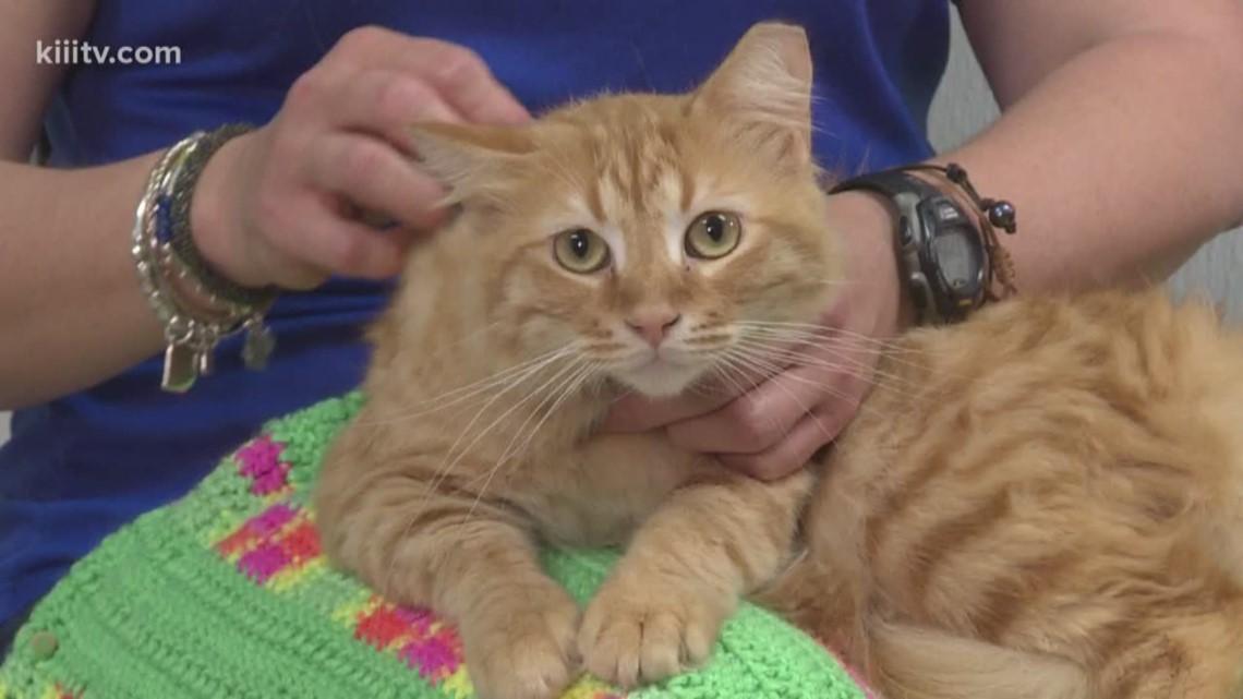 Adopt Thomas on Paws for Pets
