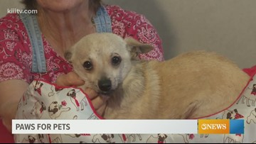 Paws for Pets: Corpus Christi June 7th