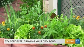 STX Gardener - First time garden prep
