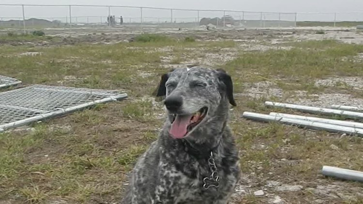 Island Report: Construction is underway for a dog park on Padre Island