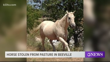 Sad update on missing horse from Beeville