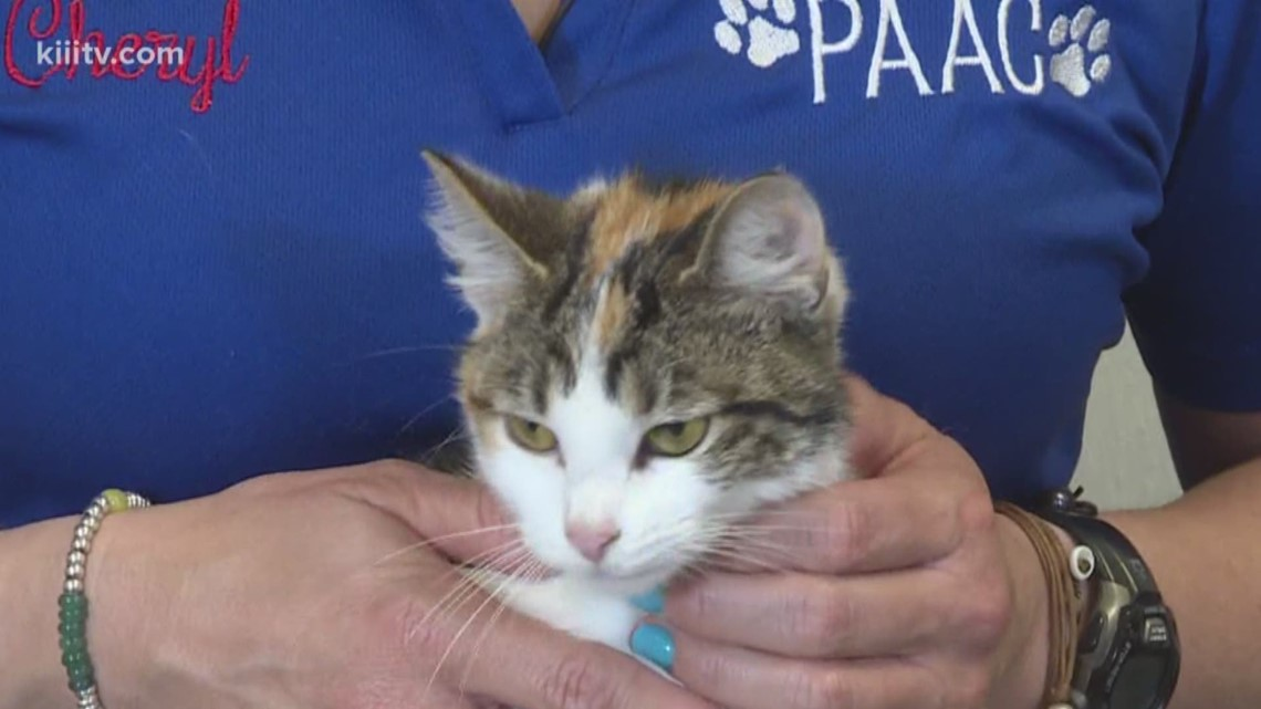 Adopt Amy Lee on Paws for Pets