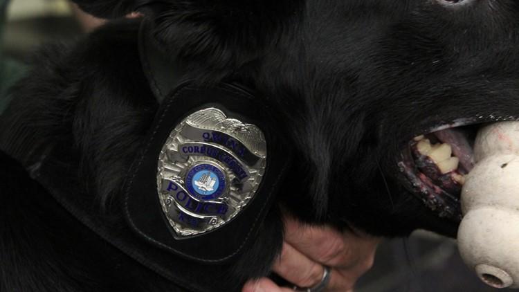 Corpus Christi Police Department K9s enjoying retirement