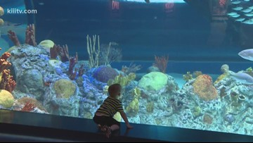 Sensory Sensitive Sunday & Community Resource Fair at Texas State Aquarium