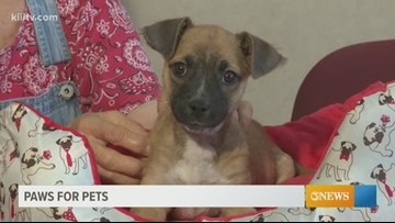Adopt Annie on Paws for Pets