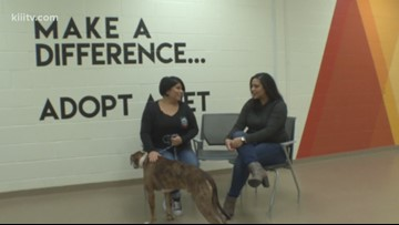 Adopt Kilo on Paws for Pets