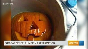 STX Gardener - Preserving pumpkins