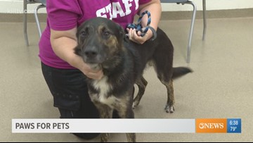 Adopt Axel on Paws for Pets