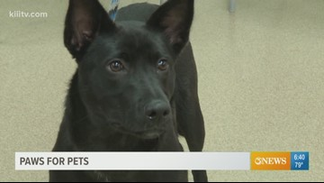 Adopt Amy on Paws for Pets