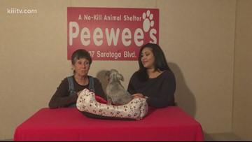 Adopt Gigi on Paws for Pets
