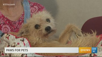 Adopt Suzie on Paws for Pets