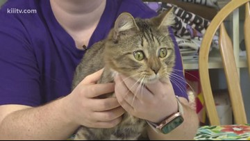 Adopt Roy on Paws for Pets