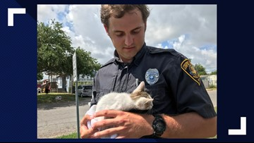 Kitten rescued from a storm drain near Lindale Park