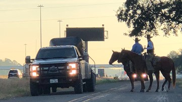 35 calves still missing after escaping in 'freak accident', causing traffic nightmare Wednesday morning