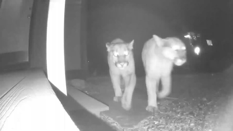 Doorbell camera footage shows unexpected guests in Colorado town