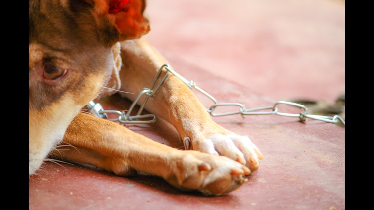 <p>A lawmaker proposed a bill that would make it a misdemeanor to leave a dog restrained in Texas.</p>