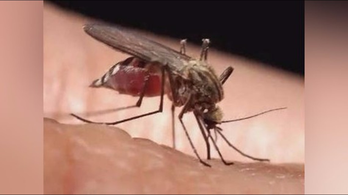 Why is Texas more at risk for mosquitoes and their diseases?