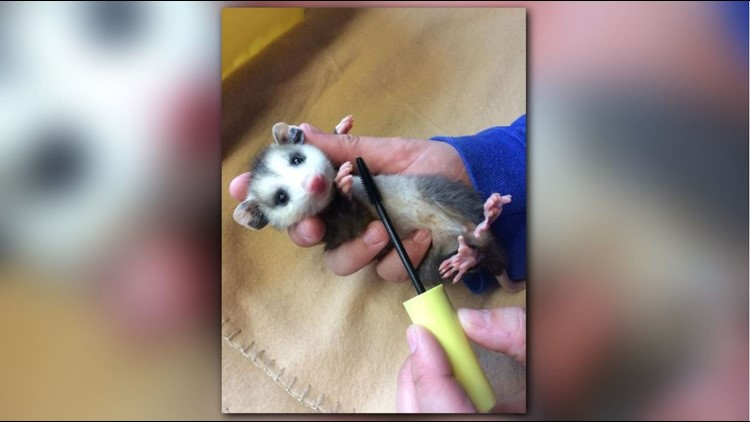 'It's beautiful' | Used mascara wands are saving lives of wild animals