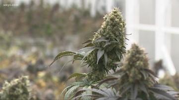 USDA OKs hemp plans for Ohio, Louisiana, and New Jersey