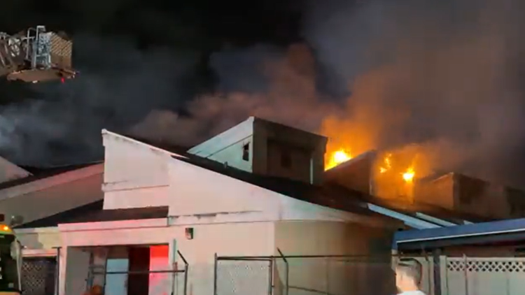 'Worst nightmare': 23 cats killed in Orlando shelter fire
