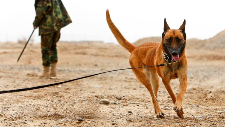 Animal rights group attacks Biden administration for allegedly leaving behind contract working dogs in Afghanistan