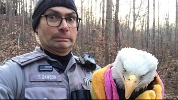 Eagle contained by Fairfax officer, Animal Protection Police is a whole mood