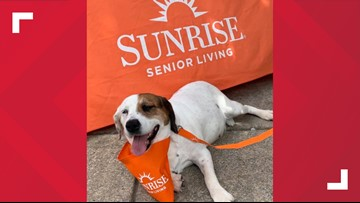 Dog saved one day before euthanasia to become senior living center 'house dog'
