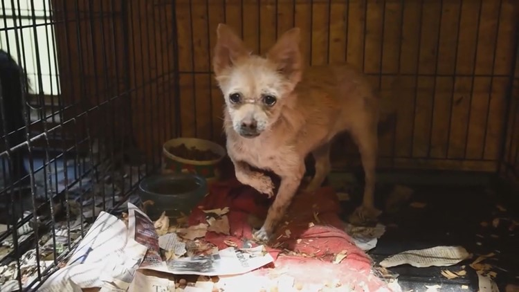 Caged in Cruelty Puppy Mill Dog
