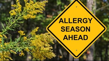 Ragweed relief: Tips to stifle your sniffles